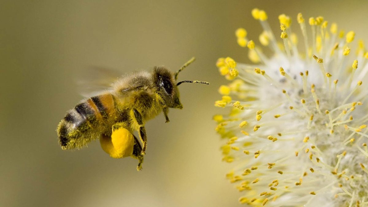 Extinct Bees Could Cost The UK £690m