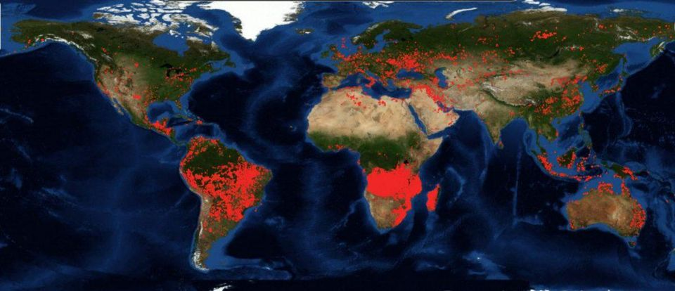 African Forests versus The Amazon: Which is burning the hottest?